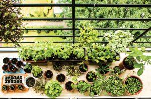 Urband Farming