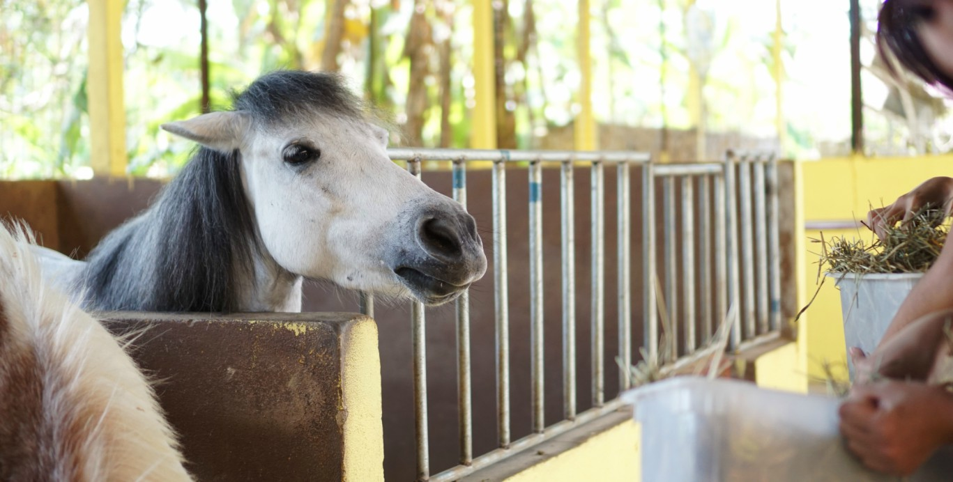 Family fun activity in Penang – Horse Riding